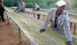 Ethiopian coffee farmers are betting on blockchain to make trade…