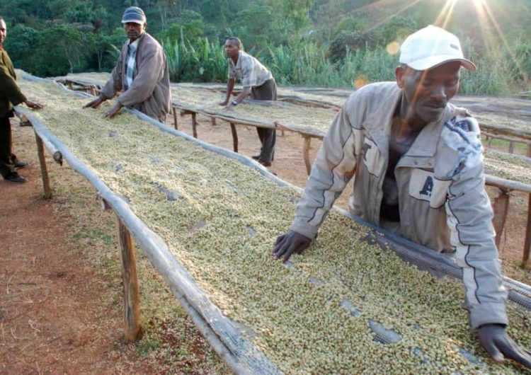 Ethiopian coffee farmers are betting on blockchain to make trade fairer and boost business